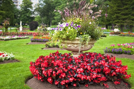 begonia: Ornate large cement planters filled with annual flowers in the summer garden.