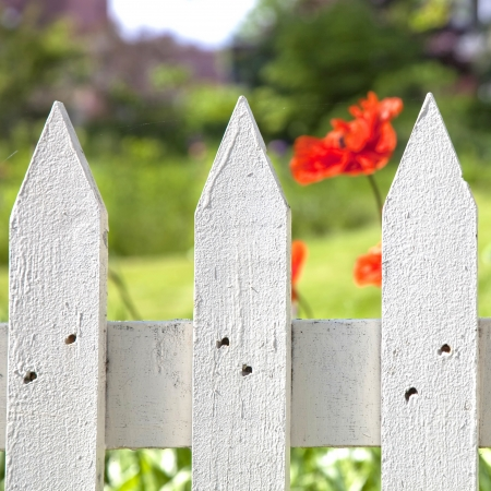 Detail of a painted white picket garaden fence with an oriental poppy in the background. photo