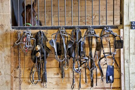 blinkers: Harness racing equipment such as bridles, harnesses and bits hanging on the exterior wall of a stall.