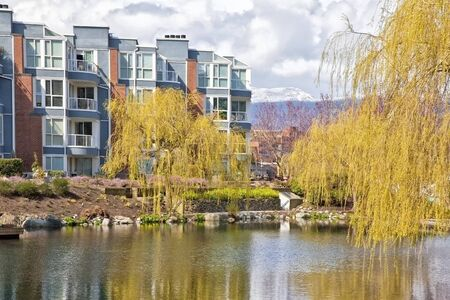 weeping willow: Weeping willow trees reflecting in a pond at the base of an apartment building. Stock Photo