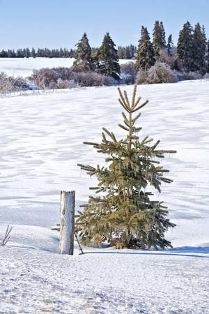 canada agriculture: Winter landscape of farmland in rural Prince Edward Island, Canada  Stock Photo
