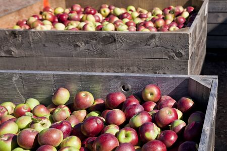 fruit: Autumn view from the farms apple harvest.