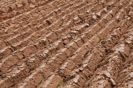 furrows: Straight furrows in a newly plowed field. Stock Photo