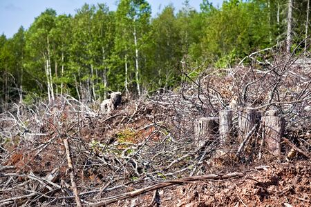 Depris and logs from clear cutting the forest. Stock Photo - 17380614