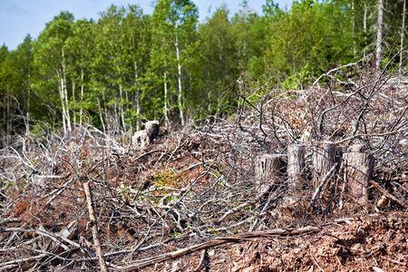 deforestacion: Depris y registros de la tala del bosque.