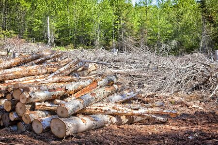 Depris and logs from clear cutting the forest. Stock Photo - 17380615