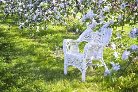 Apple tree: Sedia di vimini bianco sotto l'ombra degli alberi di mele. Archivio Fotografico