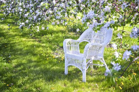 apple blossom: White wicker chair under the shade of apple trees.