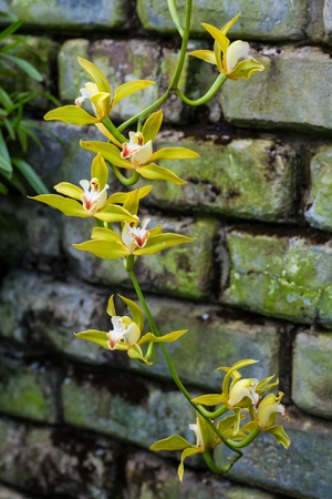 conservatory: Beautiful blooms of conservatory grown orchids.
