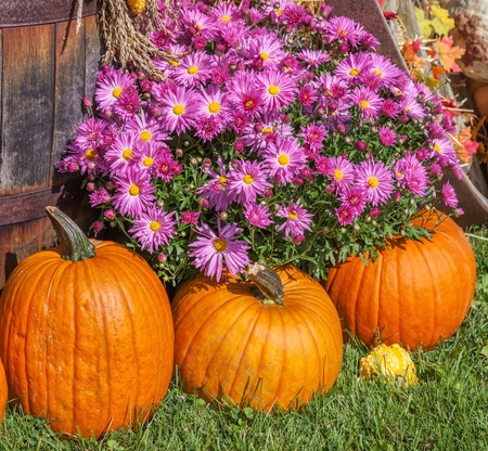 corn flower: Autumn farm display of agricultural produce and fall chrysanthemum. Stock Photo