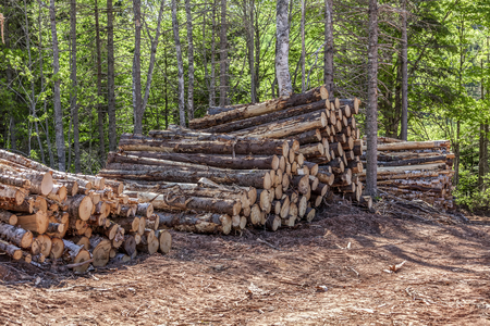 lumbering: Stacks of logs in a lumber camp. Stock Photo