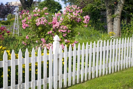 Rustic white picket fence with roses and other flowers in the background. Stock Photo