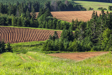 A patchwork of farm fields with hills and rows and freshly planted  potatoes in rural Prince Edward Island, Canada. photo