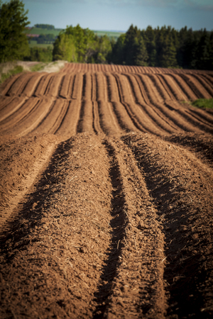 Farm field with hills and rows and freshly planted with potatoes on rural Prince Edward Island, Canada. photo