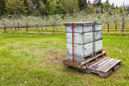 pollination: Beehives in an apple orchard to aid in pollination.