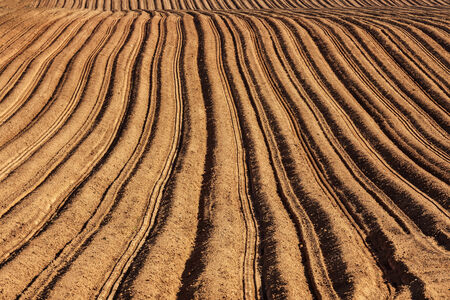 furrow: Rows and furrows in a newly planted potato field  Stock Photo
