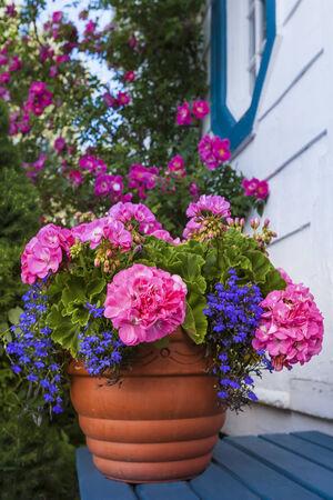 lobelia: A terracotta garden planter filled with geraniums and lobelia.
