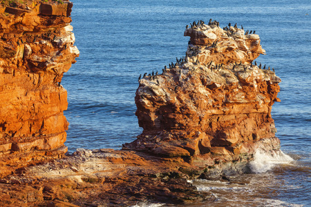 The rocky shore of Prince Edward Island at daybreak illuminating the cliffs and rocks bright red  A colony of cormorants clings to a distant rock stack  photo