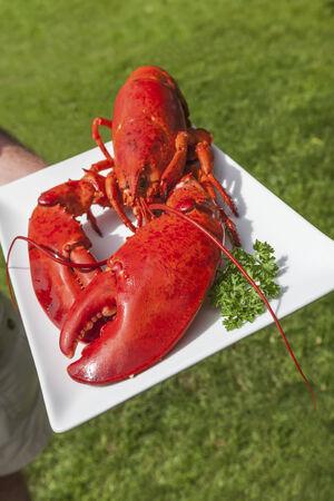 lobster pots: Freshly cooked lobster on a platter.