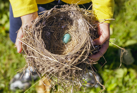 robins: A child holding a birds nest with a single robins egg.