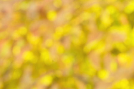 intentionally: A fall of autumn foliage intentionally blurred in camera by non focus.