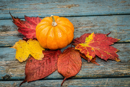 minature: A small minature pumpkin and fall leaves. Stock Photo
