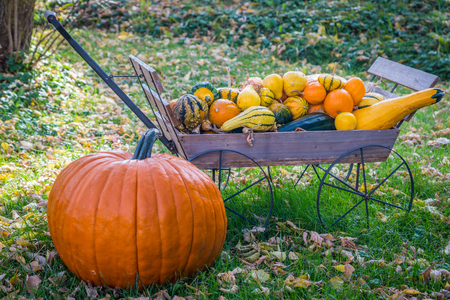 large pumpkin: A large pumpkin and a hand cart full of autumn gourds on a leafy lawn. Stock Photo