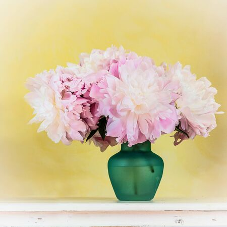 Pink garden peonies in a glass vase against a yellow wall. Stock Photo