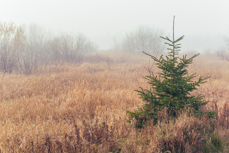 Foggy morning in the fall landscape of rural Prince Edward Island, Canada. Stock Photo