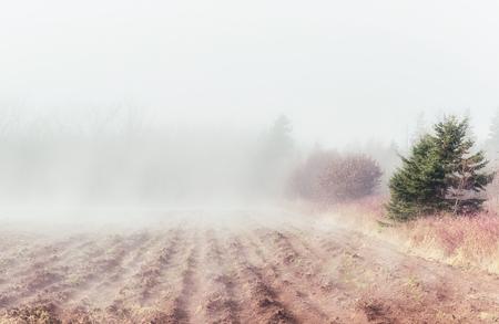 Fog rolling in on a plowed field in rural Prince Edward Island, Canada.