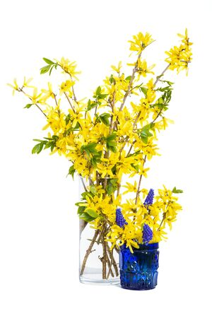 A spring bouquet of forsythia and muscari.