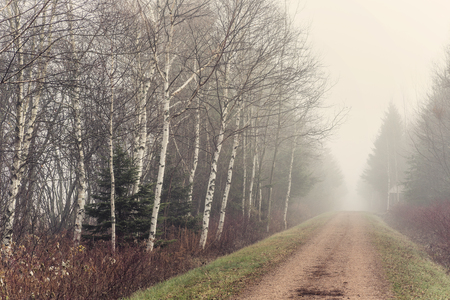 confederation: The Trans Canada trail on a foggy november day.  Also know as the Confederation Trail.  It runs the length of Prince Edward Island, Canada.