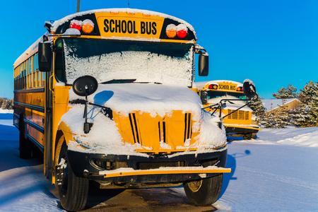 Several schoolbuses after a snowfall.