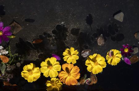 Petals floating in water