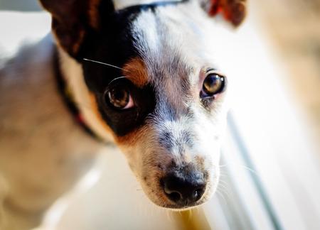 Portrait of a white puppy dog Stock Photo
