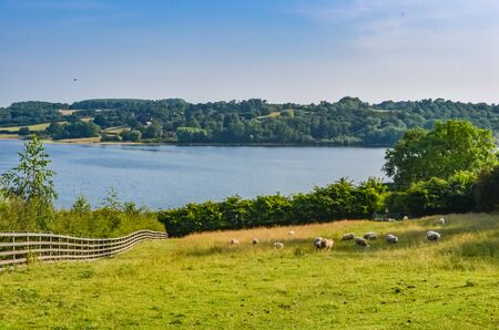Rutland Water a large reservoir in Leicestershire. With blue sky, grass and trees and curving shoreline