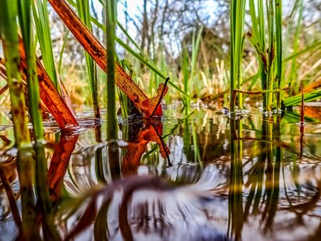 View along water level of red leaf and green reeds with foreground not in focus. Spot focus.