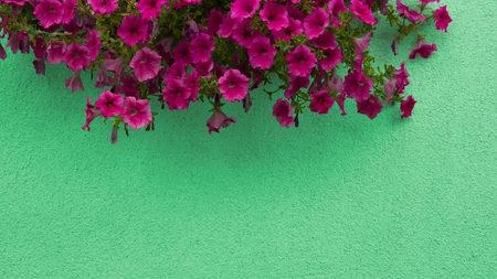 Close up view of red flowers on top of concrete background, top view, place for text, banner.