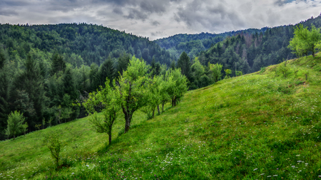 Tranquil scenery of meadow with few trees and green forest with blue cloudy sky in the background. HDR technique, Gorski Kotar, Croatia.