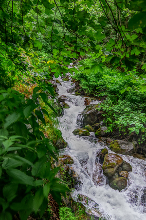 Beautiful view of one mountain river with waterfalls in colorful summer forest with green leaves.Long exposure, HDR technique, nature landscape.