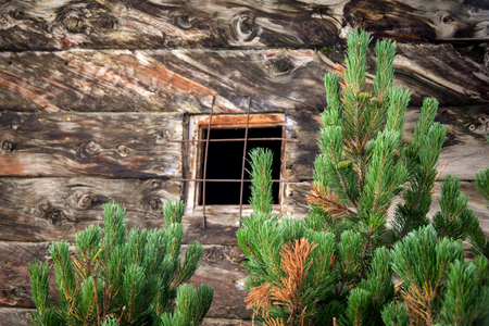 Front view of green leaves with wooden wall in the background with small window in the center. Background. Reklamní fotografie