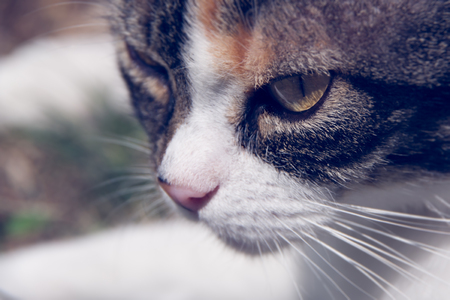 Close up view of a cats head, photo taken in the garden during the summer day. Rijeka, Croatia. Reklamní fotografie