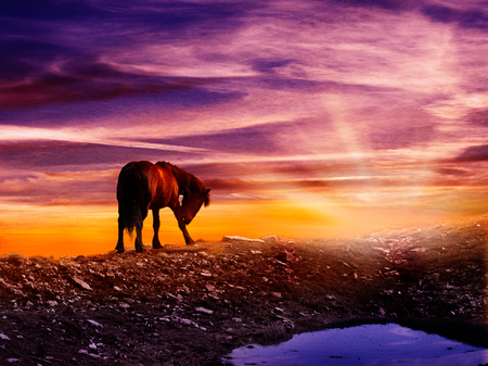 Fantasy scene of a horse on the thop of the mountain saluting the Sun. Surrounded with magic orange sunlight. Sunset on Obruc, Rijeka, Croatia, Europe.