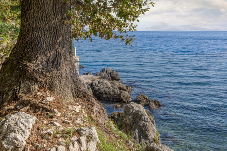 Close up view of one tree with green leaves on the left side and blue sea on the right side. Use for background. Autumn in Opatija, Croatia, Europe.