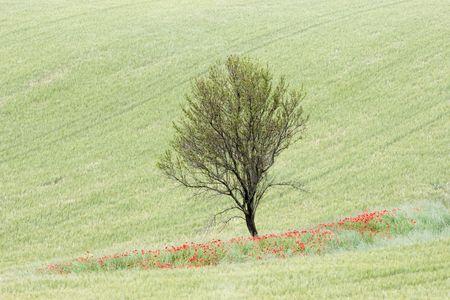 Una escena de ountry c en zonas rurales de Provenza de Francia
