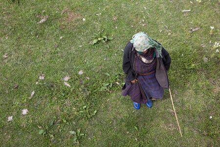 An elderly woman shepherding cows in Bhutan