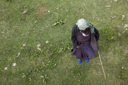 An elderly woman shepherding cows in Bhutan