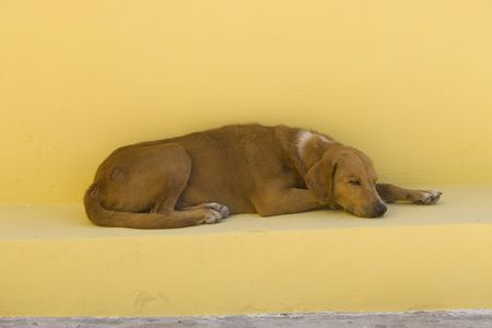 A dog sleeping on a yellow bench in Mexico