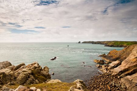 skomer island: Looking over to Skomer Island from Martins Haven, Pembrokeshire, Wales.