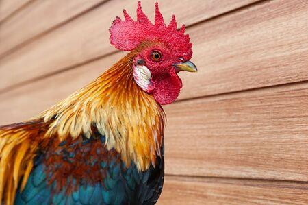 Headshot portrait of a wild fowl
